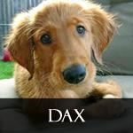 Dax_icon.jpg