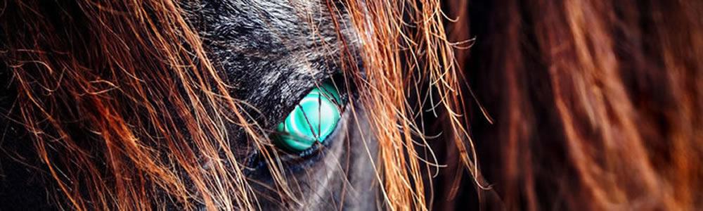 HorseBioticEye.jpg
